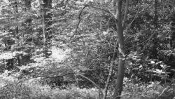 170827 Thetford Forest 072