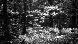 170827 Thetford Forest 076