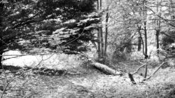 170827 Thetford Forest 106