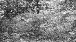 170827 Thetford Forest 111 1