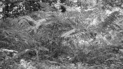 170827 Thetford Forest 113