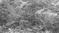 170827 Thetford Forest 116 1
