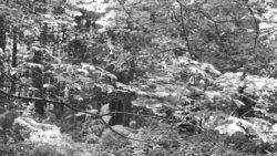 170827 Thetford Forest 121
