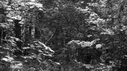170827 Thetford Forest 125