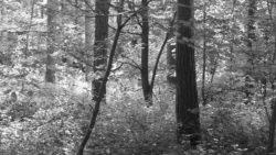 170827 Thetford Forest 130