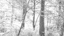170827 Thetford Forest 134 1