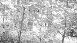 170827 Thetford Forest 135