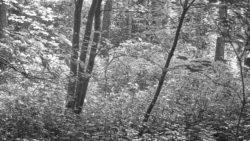 170827 Thetford Forest 140