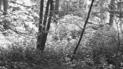 170827 Thetford Forest 142