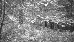 170827 Thetford Forest 145
