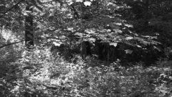 170827 Thetford Forest 148