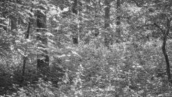 170827 Thetford Forest 150
