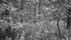 170827 Thetford Forest 153