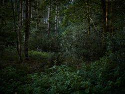 170827 Thetford Forest 176