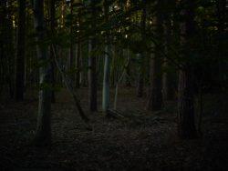 170827 Thetford Forest 191