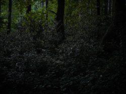 170827 Thetford Forest 214