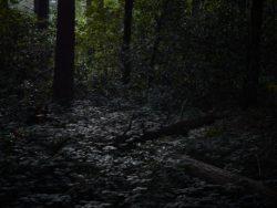 170827 Thetford Forest 217