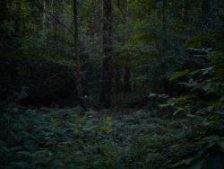 170827 Thetford Forest 230