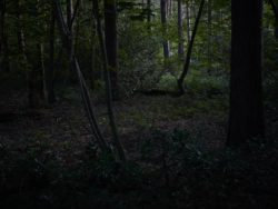 170827 Thetford Forest 250