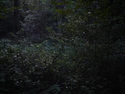 170827 Thetford Forest 261