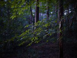 170827 Thetford Forest 279