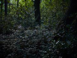 170827 Thetford Forest 289