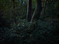 170827 Thetford Forest 295