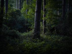 170827 Thetford Forest 304