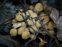 171001 Mushrooms252