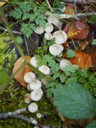 171001 Mushrooms291