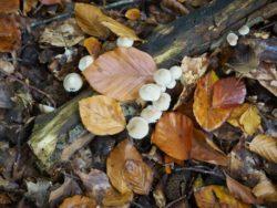 171001 Mushrooms301