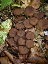 171001 Mushrooms311