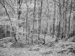 171114 Roudsea Woods 075
