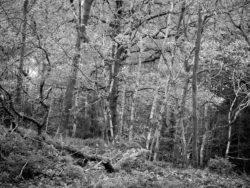 171114 Roudsea Woods 097