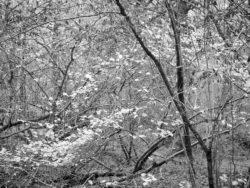 171114 Roudsea Woods 177