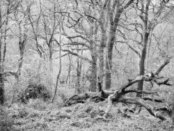 171114 Roudsea Woods 181