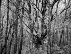 171114 Roudsea Woods 289
