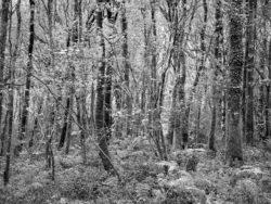171114 Roudsea Woods 293