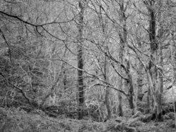 171114 Roudsea Woods 361