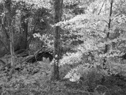 171117 Roudsea Wood 044