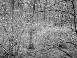 171117 Roudsea Wood 068