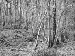171117 Roudsea Wood 073