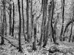 171117 Roudsea Wood 172