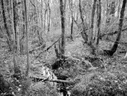 171117 Roudsea Wood 205