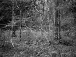 171118 Birk Dault Wood 040