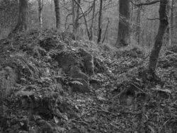 171118 Birk Dault Wood 098