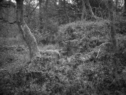 171118 Birk Dault Wood 107