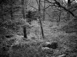 171118 Birk Dault Wood 124