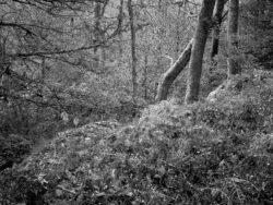 171118 Birk Dault Wood 131