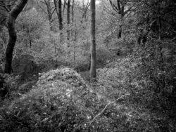 171118 Birk Dault Wood 135